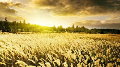 paisajes hermosos del mundo para fondo de pantalla trigo