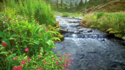 paisajes naturales hermosos rio