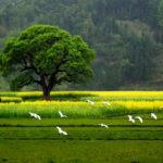 Fotos Bonitas De Paisajes Naturales Para Descargar