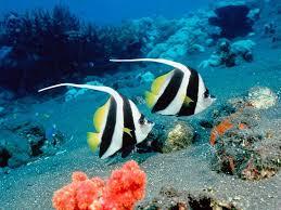 fotos de animales marinos hermosos
