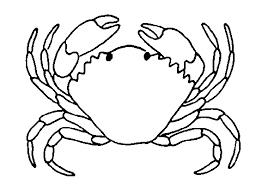 imagenes de animales acuáticos  cangrejo