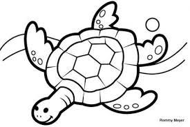 imagenes de animales acuáticos  tortuga