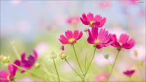 imagenes de flores moradas para portada de Facebook