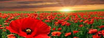 imagenes de flores para portada rojas