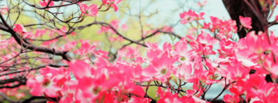 imagenes de flores para portada rosadas