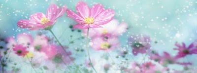 imagenes de flores para portada suaves