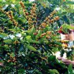 Paisajes De Colombia Eje Cafetero Paraísos Naturales