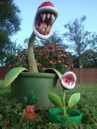imagenes de plantas carnívoras reales