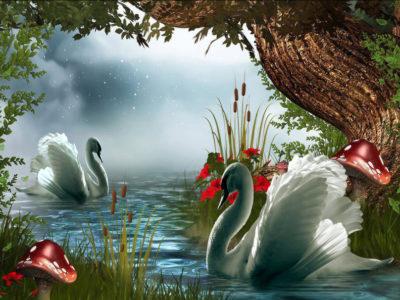 paisajes romanticos con cisnes enamorados