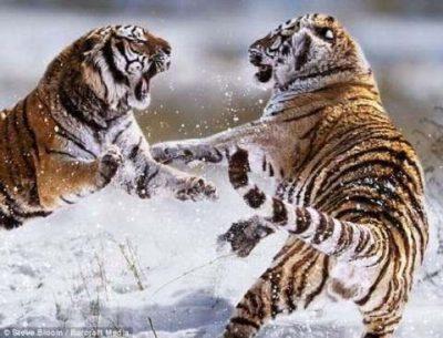 fotos-de-paisajes-hermosos-con-animales