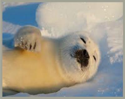 nieves perpetuas con animales