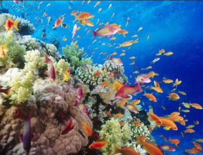 arrecifes-de-coral-en-caricaturas