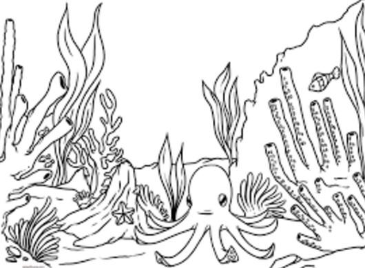 Hermosos Dibujos De Arrecifes De Coral Para Colorear Fácil |
