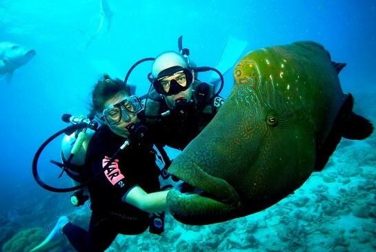 fotos-de-buceo-en-la-gran-barrera-de-coral-australiana