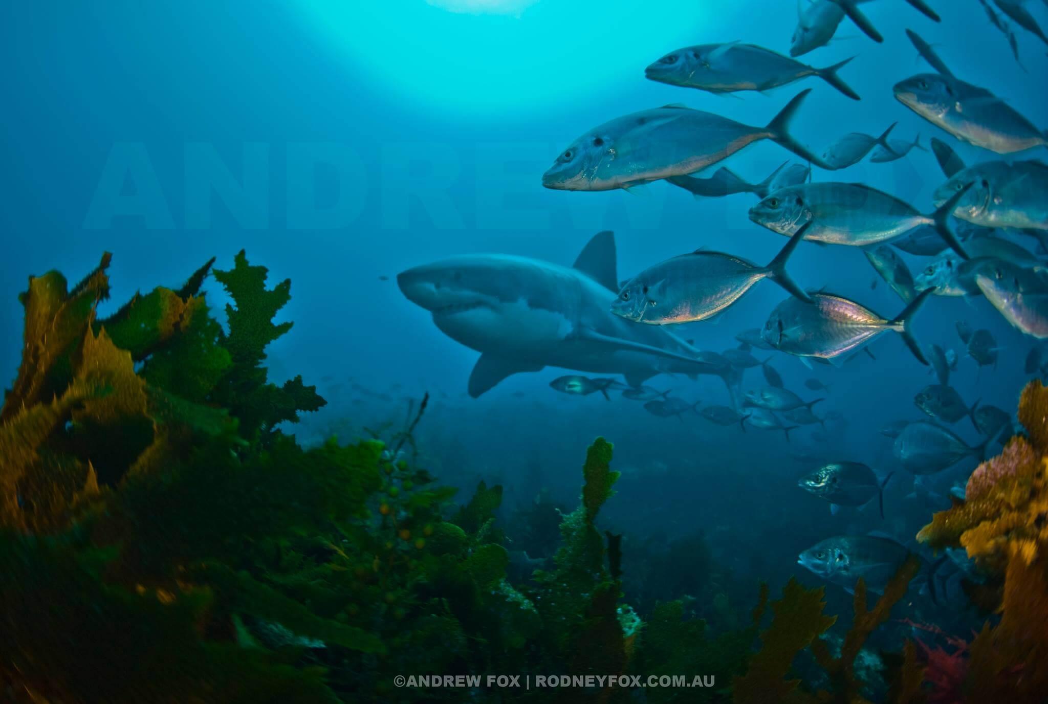 fotos-gratis-de-arrecifes-de-coral