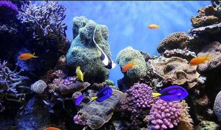 imagenes-de-la-gran-barrera-de-coral-de-australia