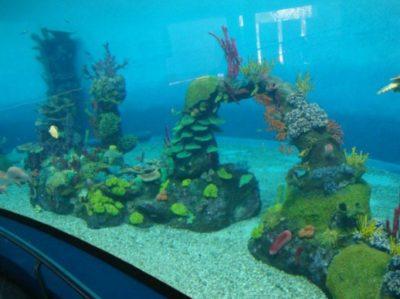 imagenes-arrecifes-coral-artificiales