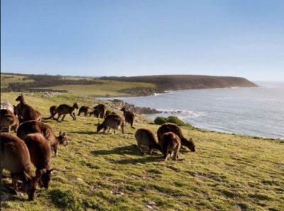 paisajes-tipicos-de-australia