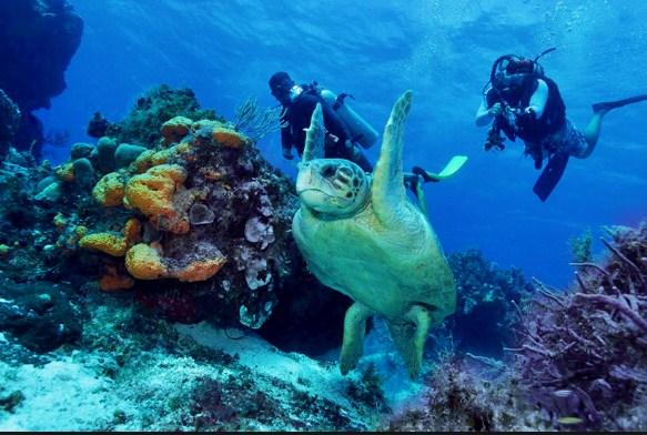 principales-arrecifes-de-coral-en-el-mundo