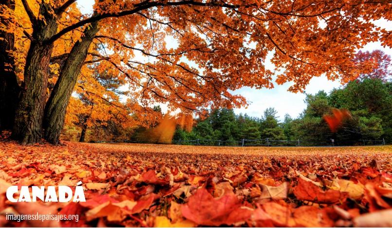 paisaje de Canadá en otoño
