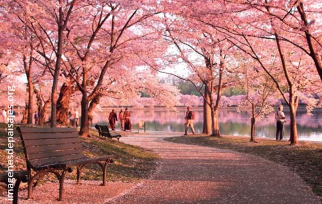 paisajes de primavera para fondo de pantalla