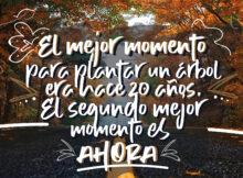 El mejor momento para plantar un árbol era hace 20 años. El segundo mejor momento es AHORA