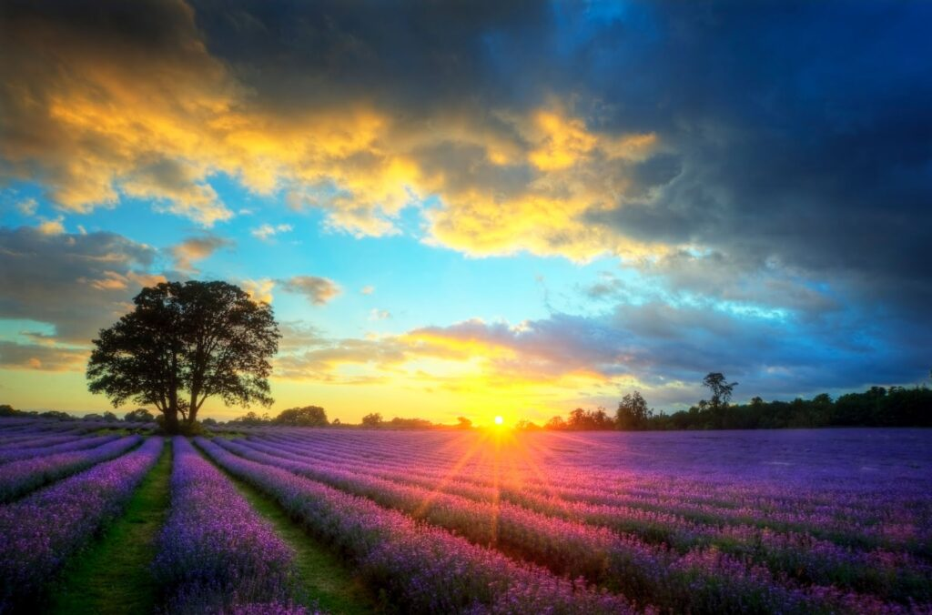 paisaje de amanecer con flores lila