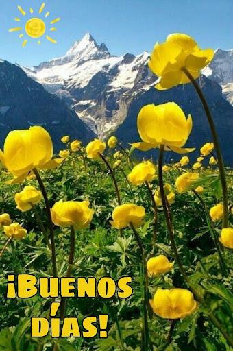 flores amarillas y paisaje de buenos dias