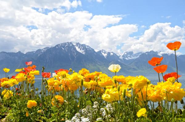 paisaje con flores y montaña