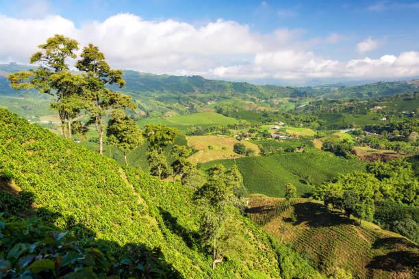 paisaje ladera de montaña con cafe