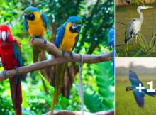 imagenes de aves en paisajes