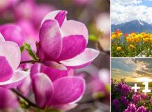 postales de paisajes con flores