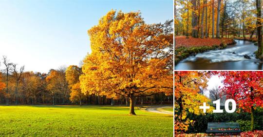 paisajes en otoño con colores