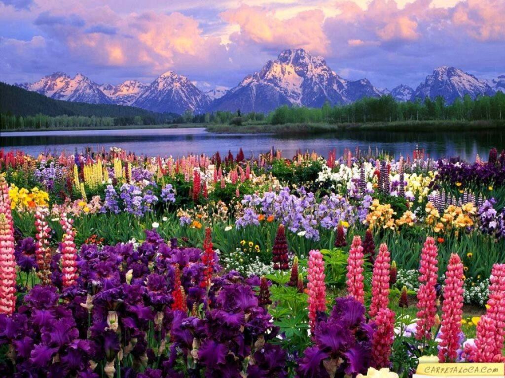 paisaje con flores de colores