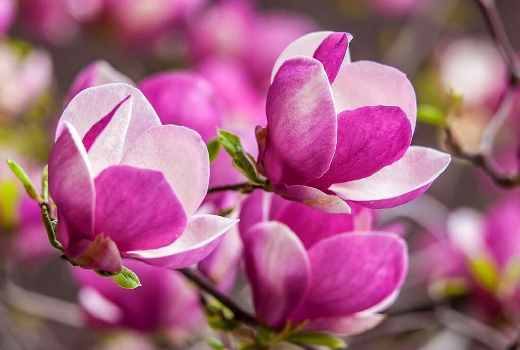 flores de color lila