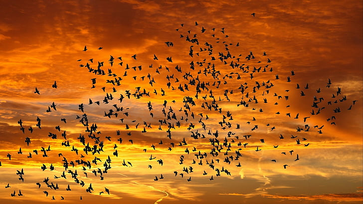 aves volando en el atardecer