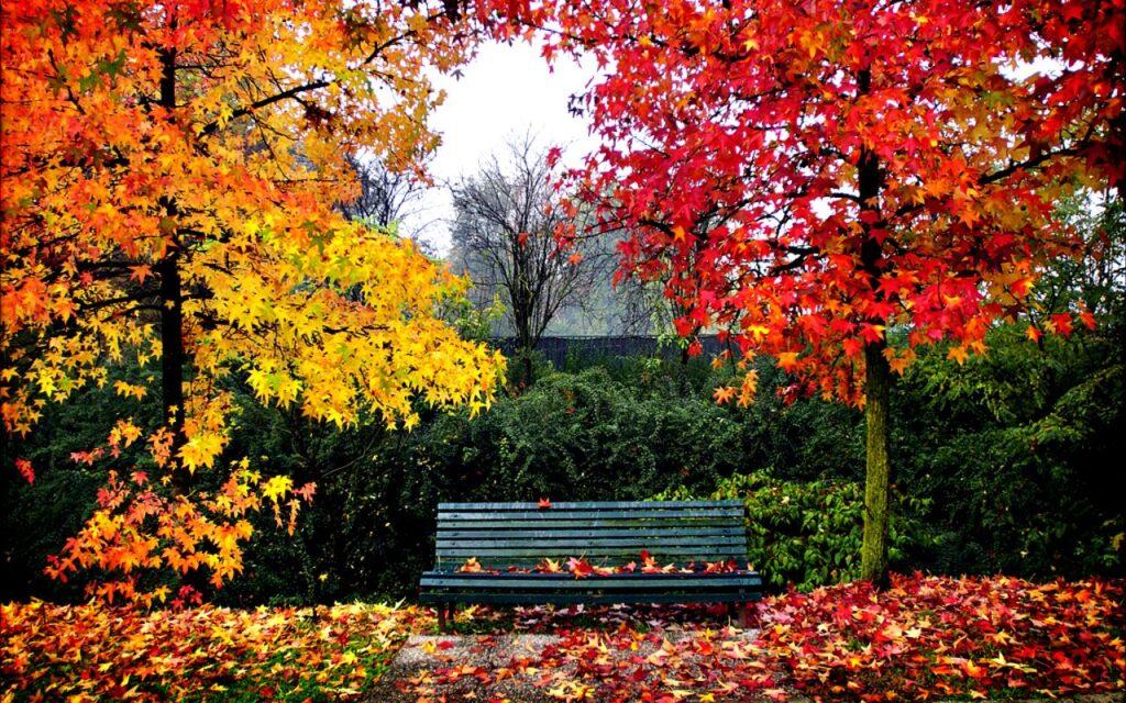 paisaje de otoño arboles y banca