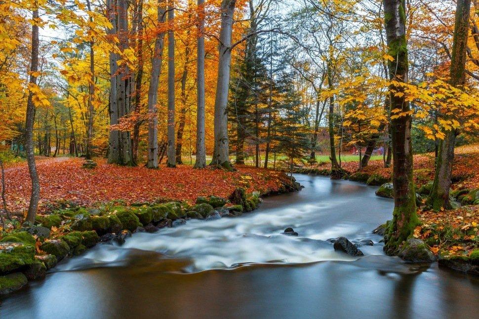 rio en otoño con arboles