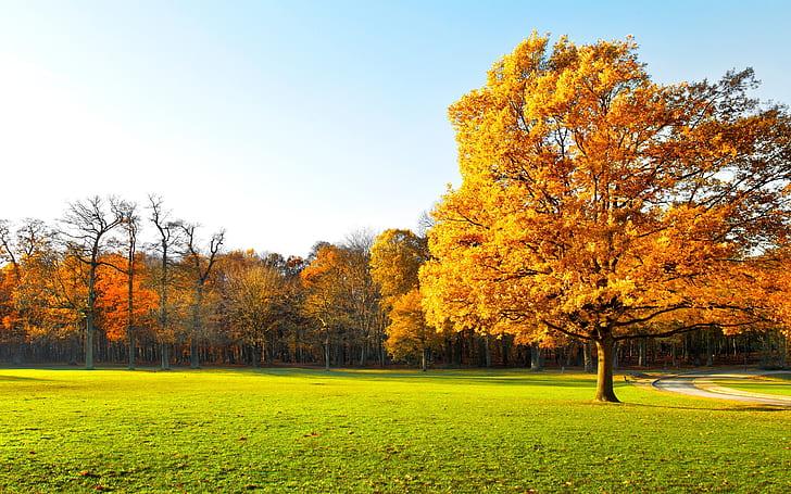 paisaje de otoño arbol en campo