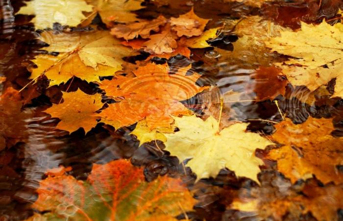 hojas de otoño en el rio
