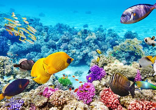 paisaje arrecife de coral con peces